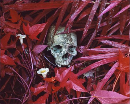 richard-mosse-Of-Lilies-and-Remains-Congo